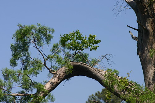 Kayaking Sawmill Park - Tree on Tree Action (by Ryan Somma)