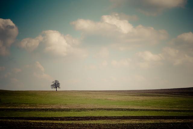 Studiu despre singurătate