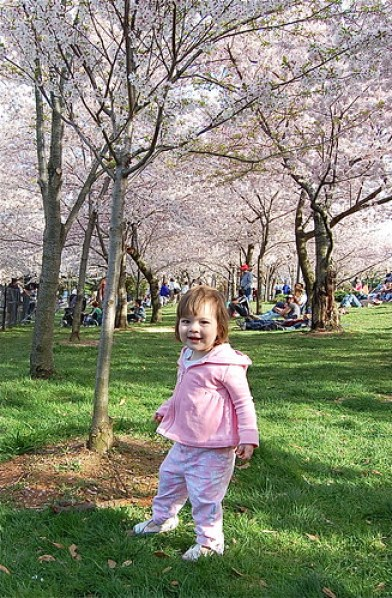 my little cherry blossom