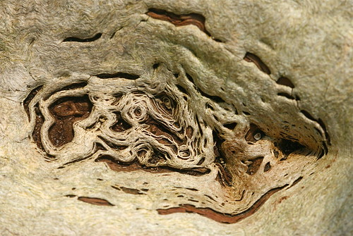 image: lace-like patterns in dead & decaying elm trunk