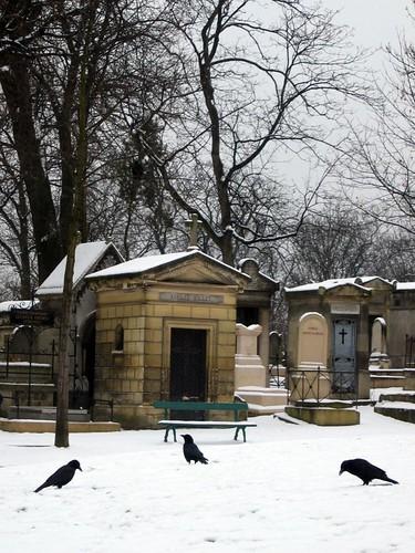 Ravens in