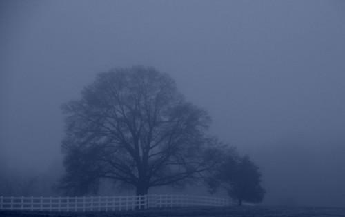 A Misty Early Morn