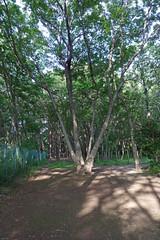 久田緑地―森を歩く(Kuden Ryokuchi, Kanagawa, Japan)