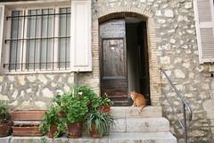 Nailed the cat shot, Tourrettes-sur-Loup