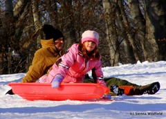 Dad and Daughter Sledding in Northampton, MA