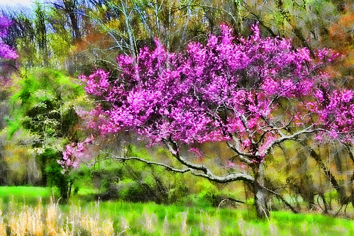 In the Mystics Spring Garden