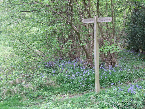 A public footpath sign amongst the bluebells