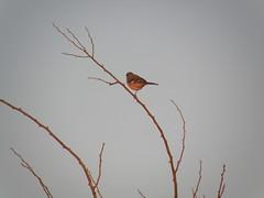 bird at twilight