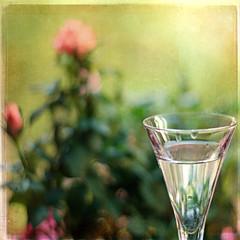 Wine & Roses