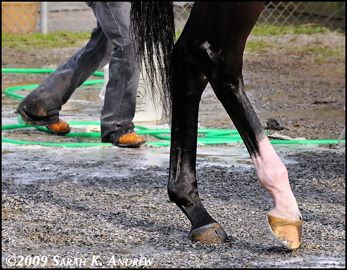 Rachel Alexandra's Detention Barn Dance Party