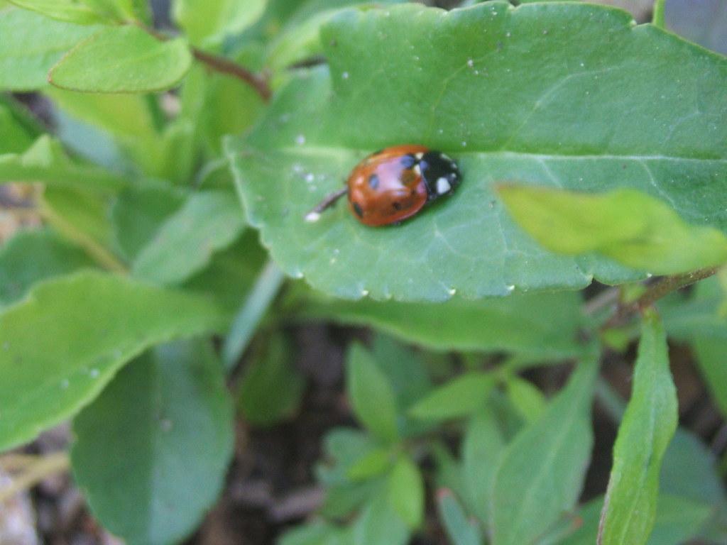 Lil' ladybug on leaf