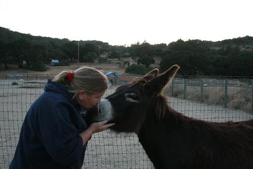 Donkey Love :)
