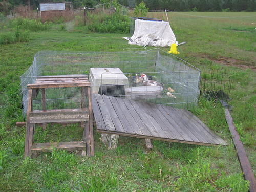 Duck Pen with Ramp