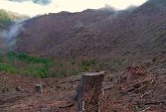 Temperate rainforest clearcutting