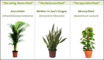 Use these plants to cleain interior air of VOCs, Ozone, etc