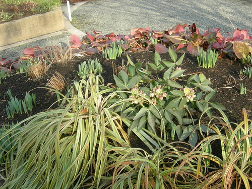 Spring arriving at UW Center for Urban Horticulture