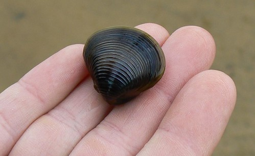 Newbold White House Recreation Trail - Ridges in Mussel Shell, Ridges in Fingersl