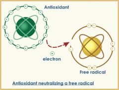 andioxidant neutalizing a free radical