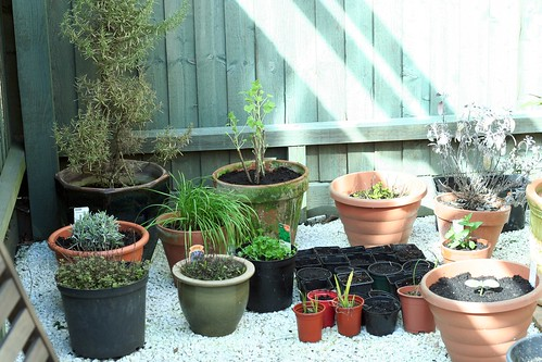 A sunday planting session
