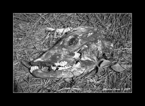 "Muerte en el Campo • <a style=""font-size:0.8em;"" href=""http://www.flickr.com/photos/20681585@N05/3425765456/"" target=""_blank"">View on Flickr</a>"
