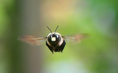 Macro Bee in-flight