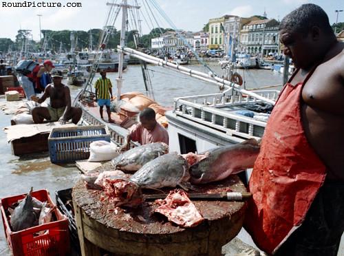 Brazil - Amazon River - Belém - Fish