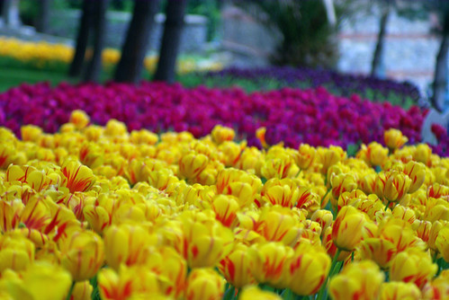 istanbul tulip festival, emirgan park, pentax k10d