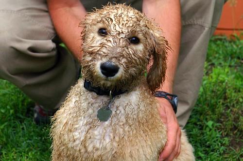 Cooper needs a bath