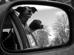Dogs Out The Window by Travis Atwood