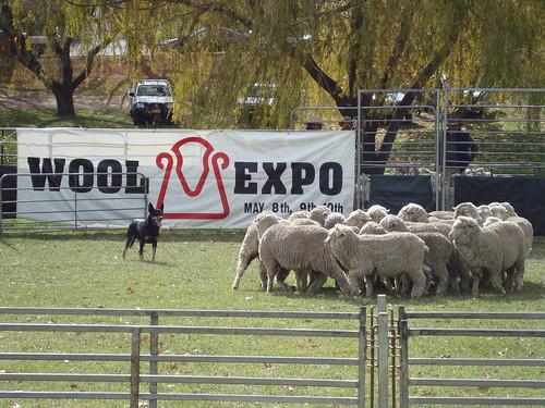 Armidale Wool Expo 2009
