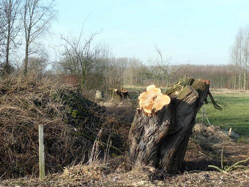 Denderen naar Dendermonde (Winter 2008-2009) (6/6)
