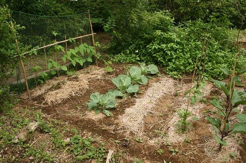one corner of the garden