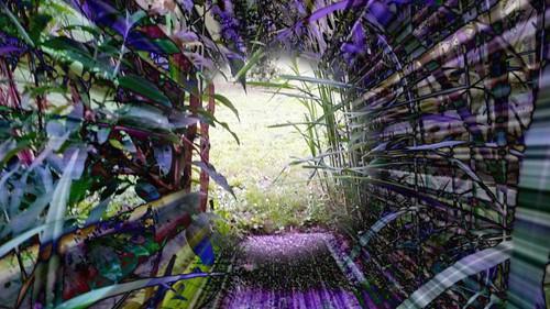 Garden path beyond