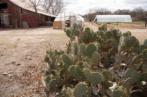 farming in Texas (by bookgrl)