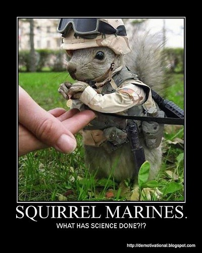 Squirrel-Marines