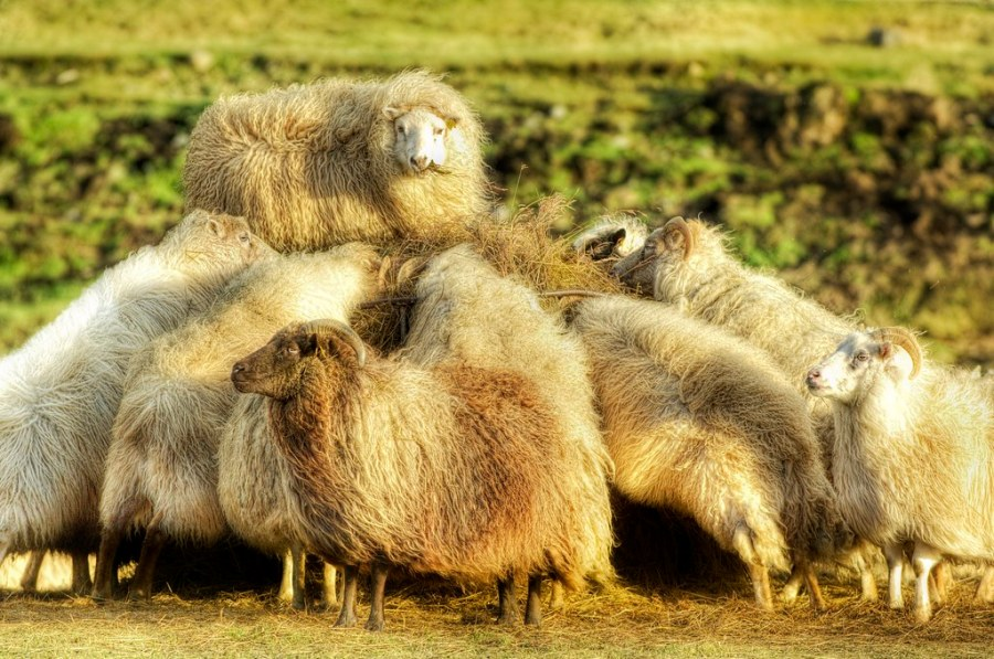 The Sheep, and we Twitter Sheep can follow these 10 great photographers!