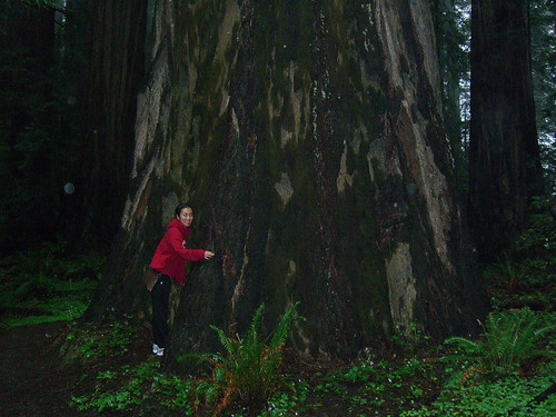 Serena next to a giant redwood