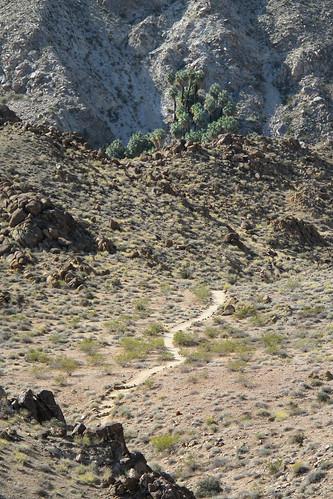 Twentynine Palms Oasis Trail by you.