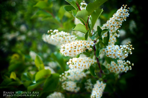 Early Summer Bloom: Among The Greens