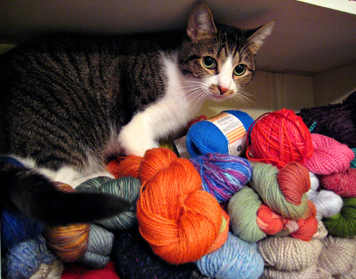 That Cat found The Yarn