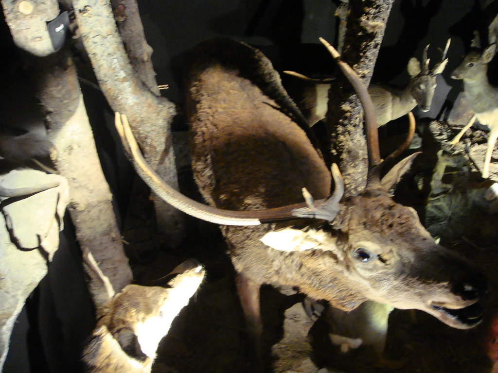 Museo de Fauna Alpina