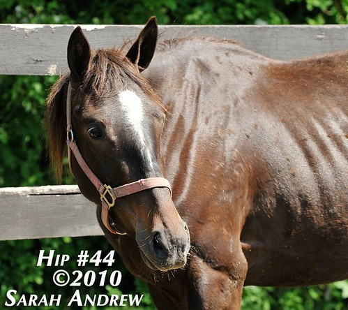 "Hip 44- ""Unbridled Ride"" filly"