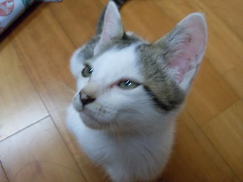 눈을 가느다랗게 뜨고 음흉한 표정을 짓는 고양이