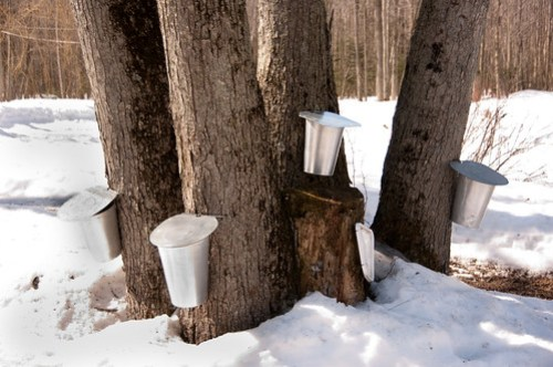 maple water buckets...