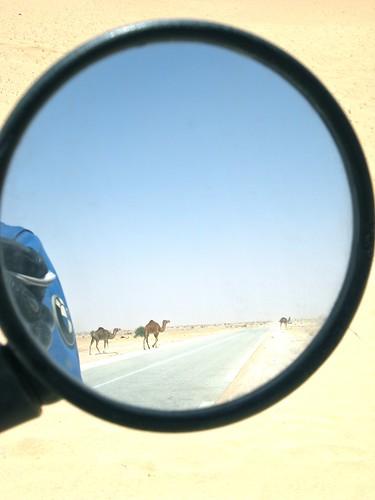 Mind The Camels