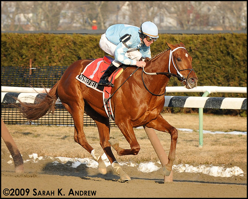 Haynesfield wins the Whirlaway Stakes at Aqueduct