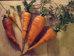 Carrots, discovered after the snow and frost abated, March 2009