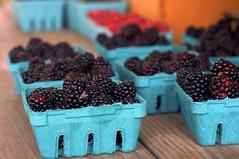 blackberries, fly