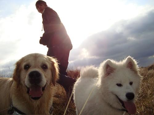 Hundpromenad
