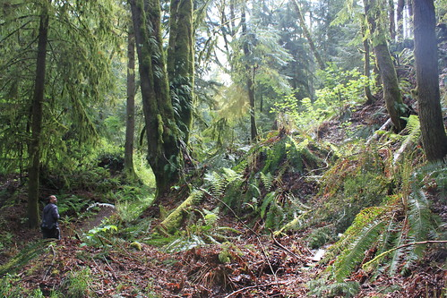 Cougar Mountain - Licorice Fern Trail - Little Ryan on Trail